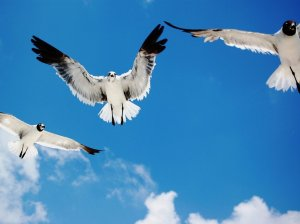 flying_birds-1234